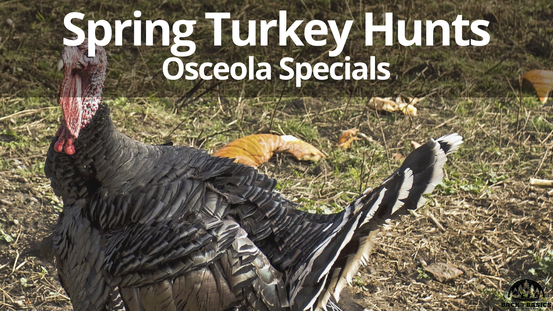 spring osceola turkey hunt, back2basics outdoor ministries